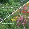 pollinator-choice