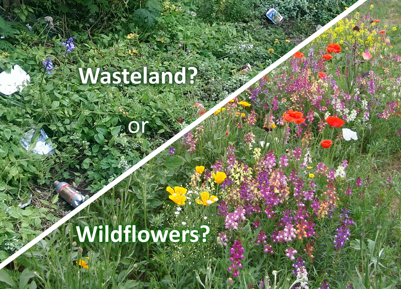 Captivating Pollinators Poll: Wildflowers V Wasteland?